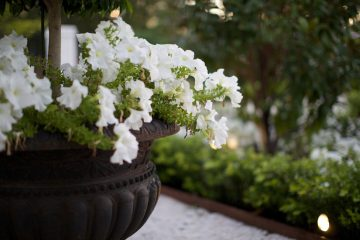 Adelaide Landscaping and Planting